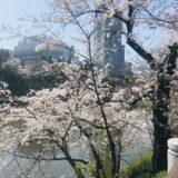 【カナルカフェ】【靖国神社】優雅な飯田橋・九段下散歩
